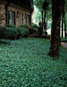 Plant Directory J L C Outdoors Lawn Amp Landscape Services